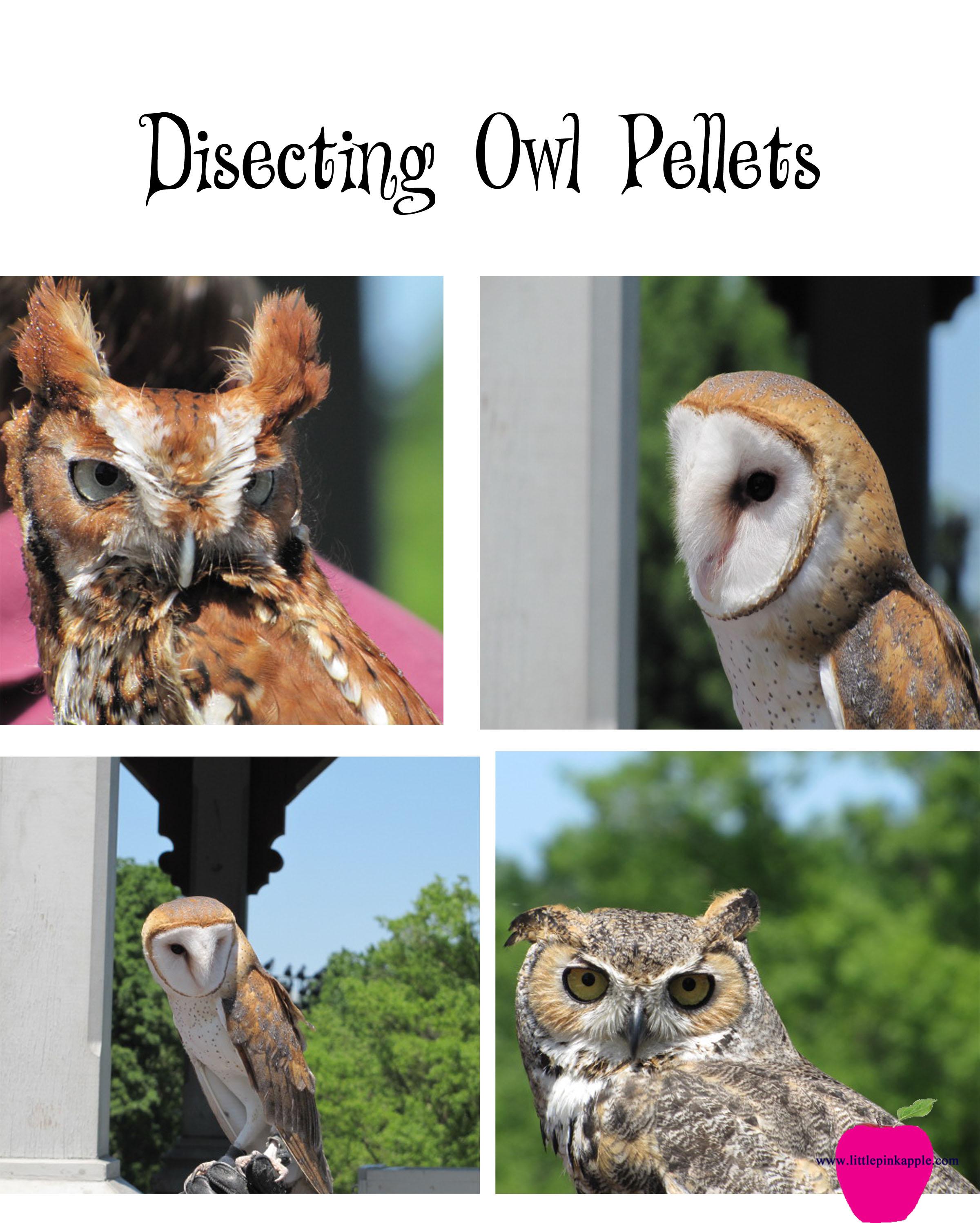 disecting pellets logo